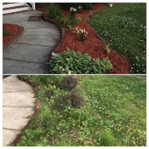 Raleigh Landscaping mulchbed